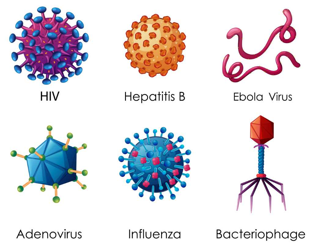 What is a Virus and what does it do ? - 6 viruses