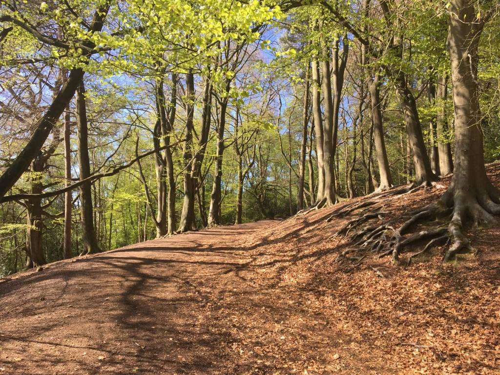 A walk in the woods - nature, beech trees and sunlight
