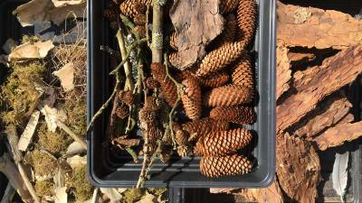 Collecting twigs, cones and bark for our bug hotel