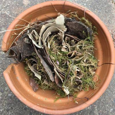Plant pot filled with tree bark and moss - to go in our bug hotel