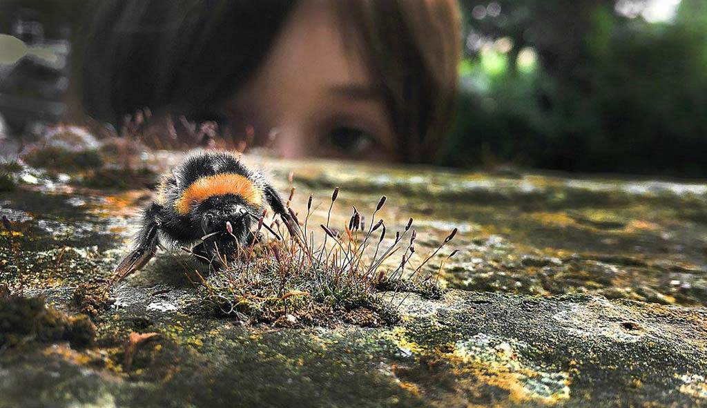 Child and bee